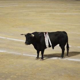 Stierkampfverbot soll noch im Juni 2016 festgelegt werden