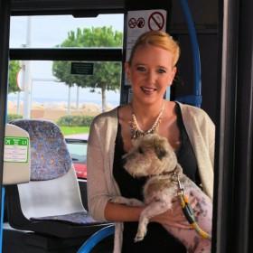 Hunde in weiteren Buslinien auf Mallorca erlaubt