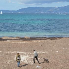 Künftig sollen Hunde an den Stränden von Calvià erlaubt sein