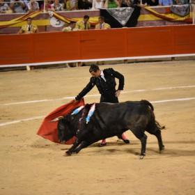 Nach Palma jetzt auch Alcudia: Immer mehr Stierkämpfe auf Mallorca