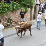 Stiertreiben Fornalutx Mallorca