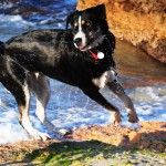 Hundestrand auf Mallorca, Foto: Heinrich Steiden